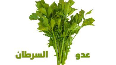 الكرفس (Celery) ارخص مضاد للسرطان في العالم