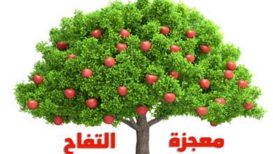 التفاح .. معجزة الفوائد التي لا تنتهي
